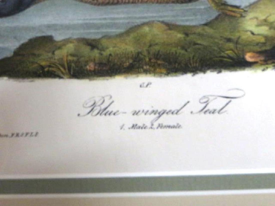 J.J. Audubon. Octavo. Blue Winged Teal No.393 - 2