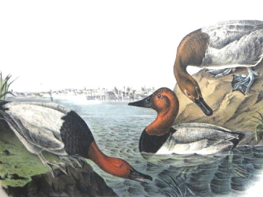 J.J. Audubon. Octavo. Canvas Back Duck No.395