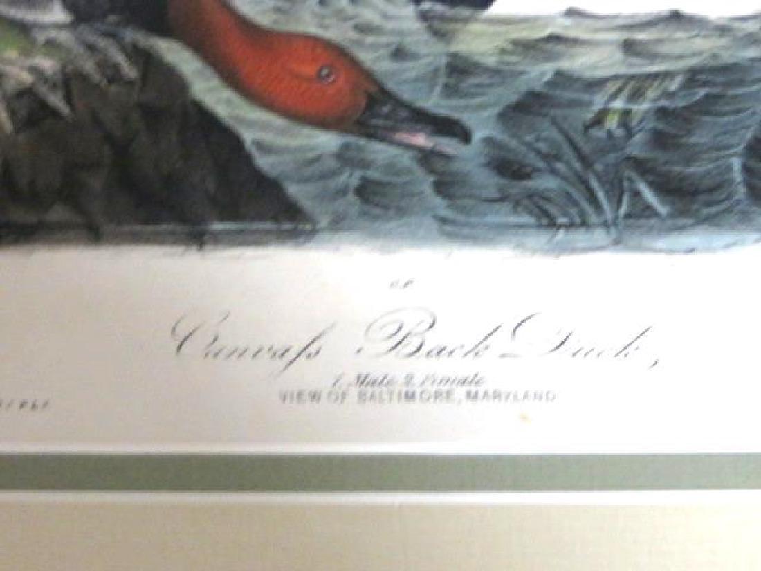 J.J. Audubon. Octavo. Canvas Back Duck No.395 - 2