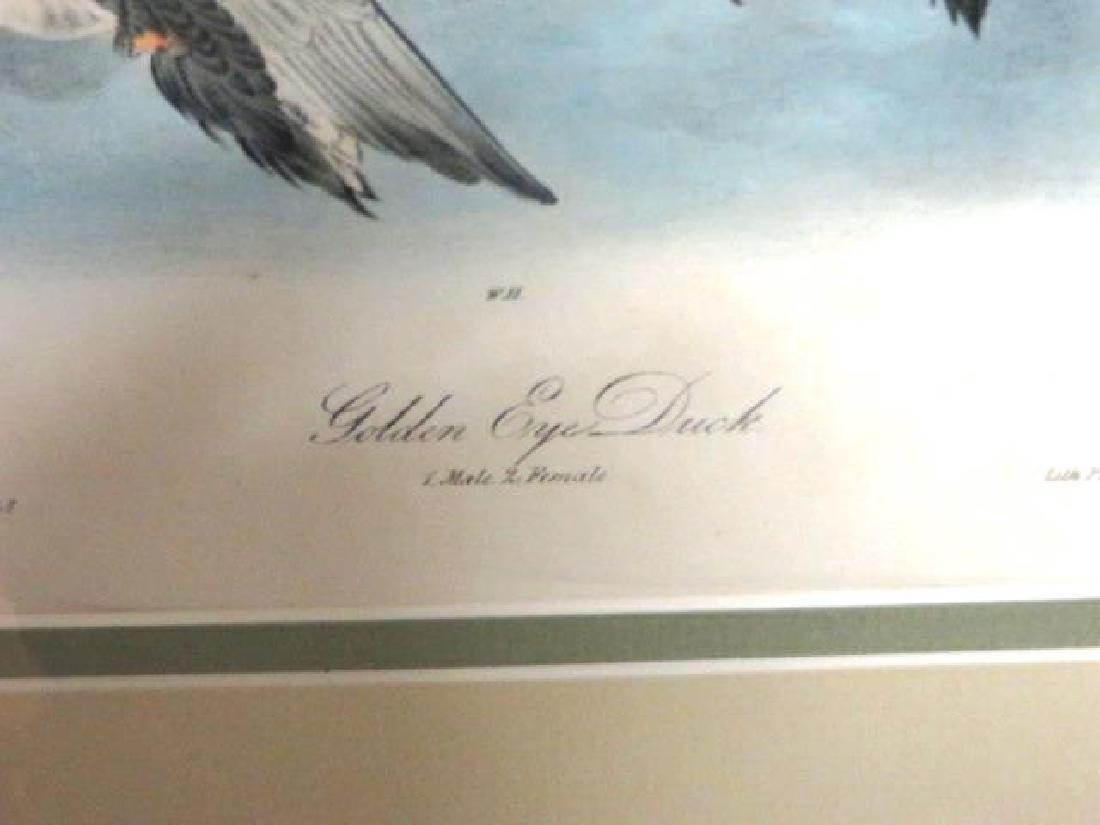 J.J. Audubon. Octavo. Golden Eye Duck No.406 - 2