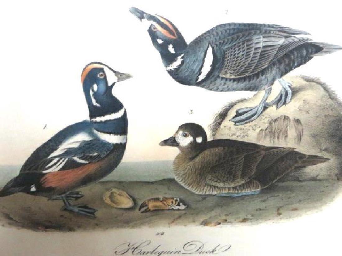 J.J. Audubon. Octavo. Harlequin Duck No.409