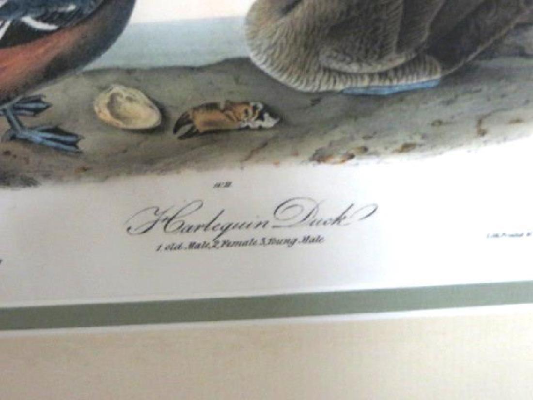 J.J. Audubon. Octavo. Harlequin Duck No.409 - 2