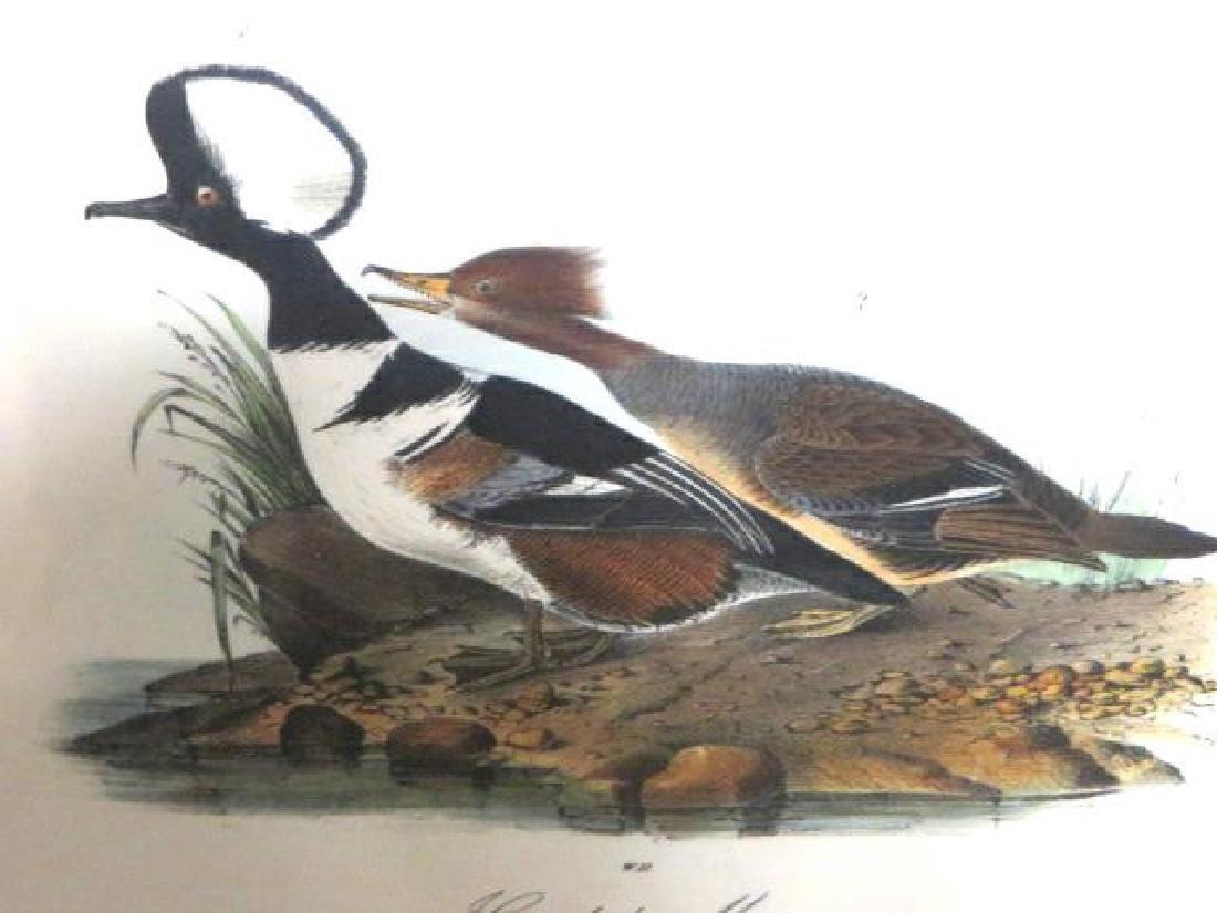 J.J. Audubon. Octavo. Hooded Merganser No.413