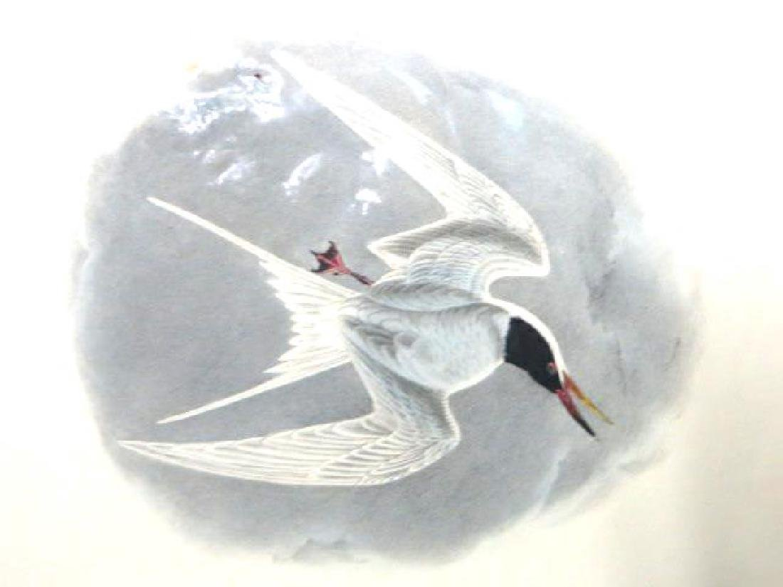 J.J. Audubon. Octavo. Common Tern No.433