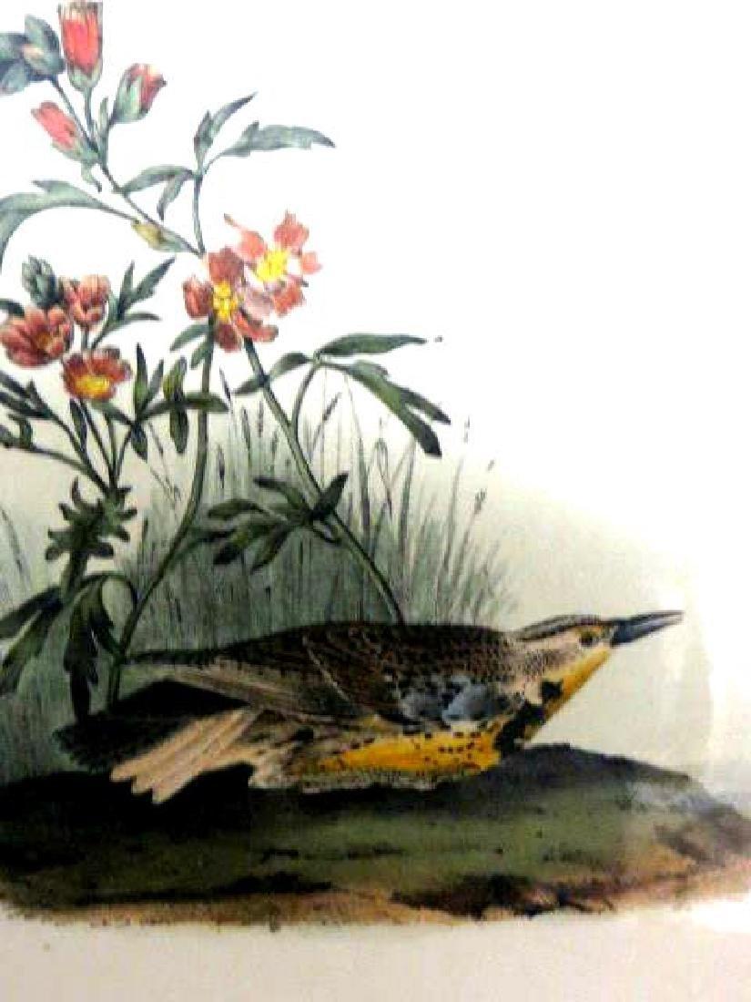J.J. Audubon. Octavo. Missouri Meadow Lark No.489