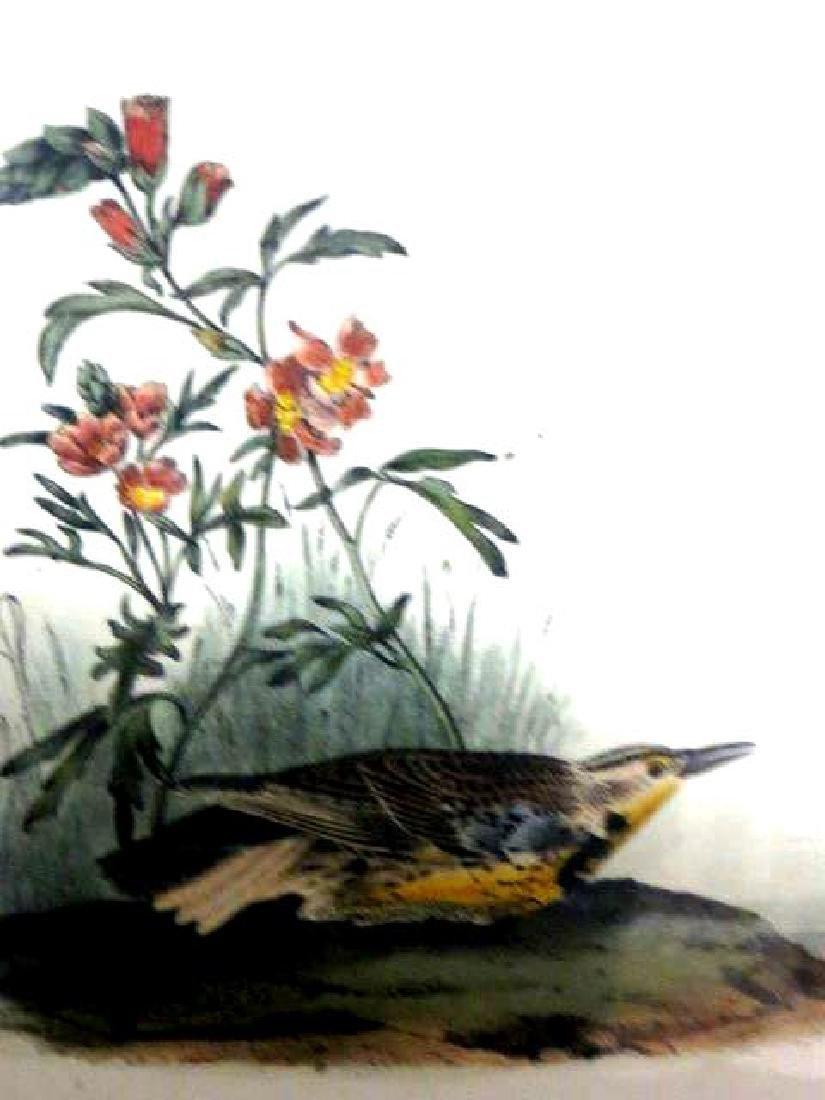 J.J. Audubon. Octavo. Missouri Meadow Lark No.489 - 2