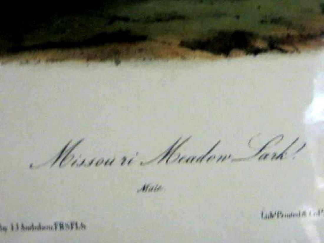 J.J. Audubon. Octavo. Missouri Meadow Lark No.489 - 3
