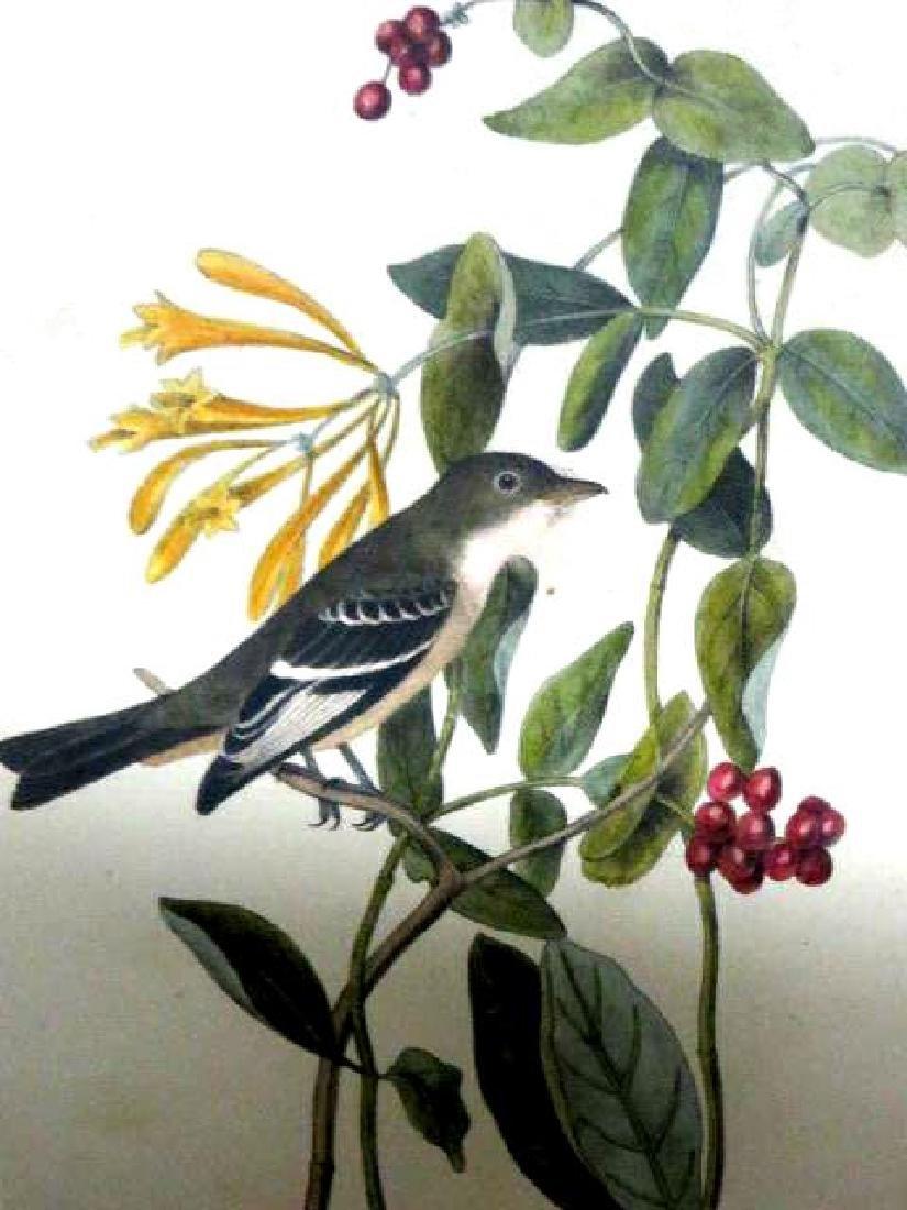 J.J. Audubon. Octavo. Least Flycatcher No.491