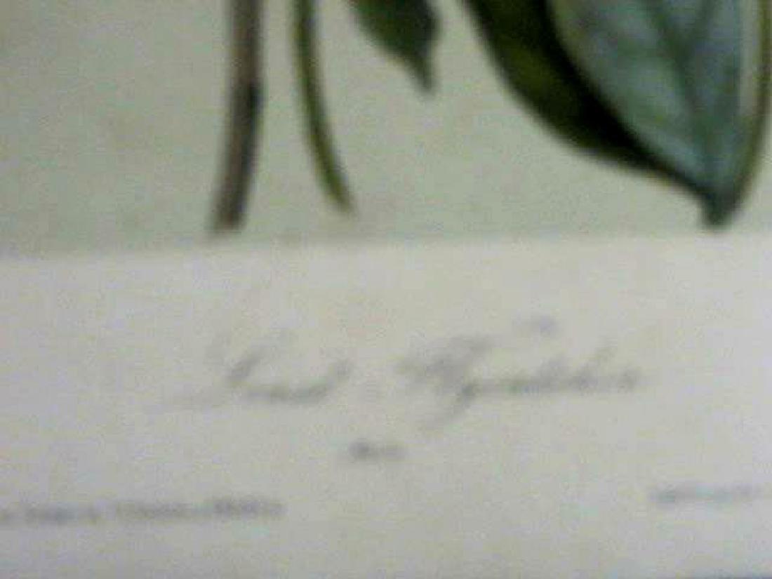 J.J. Audubon. Octavo. Least Flycatcher No.491 - 2