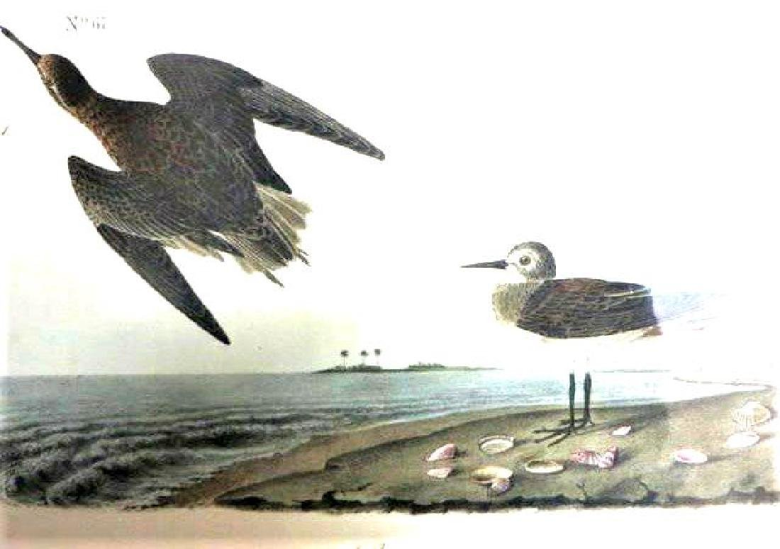 J.J. Audubon. Octavo. Schinz's Sandpiper No.335
