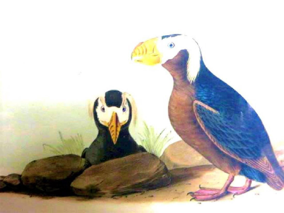 J.J. Audubon. Octavo. Tufted Puffin No.462