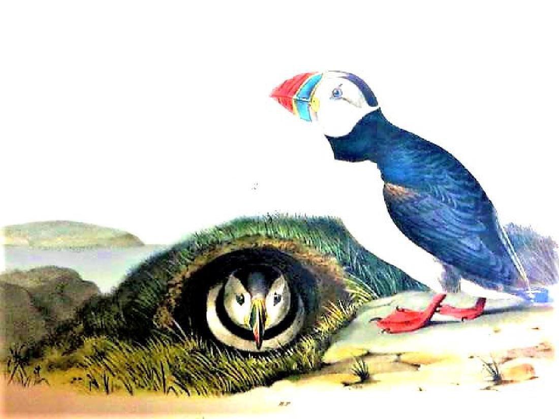 J.J. Audubon. Octavo. Common or Arctic Puffin No.464