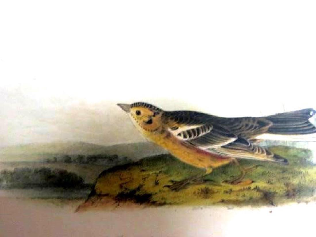 J.J. Audubon. Octavo. Smith's Lark Bunting No.487