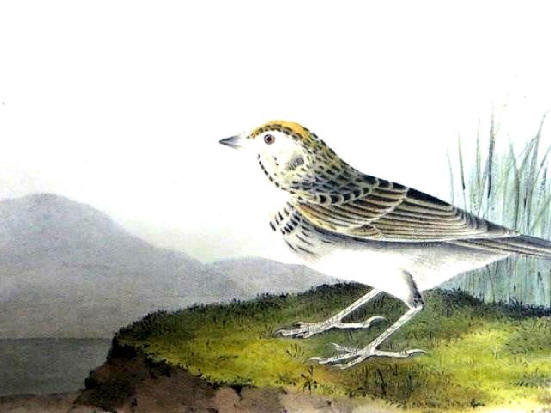 J.J. Audubon. Octavo. Baird's Bunting No.500