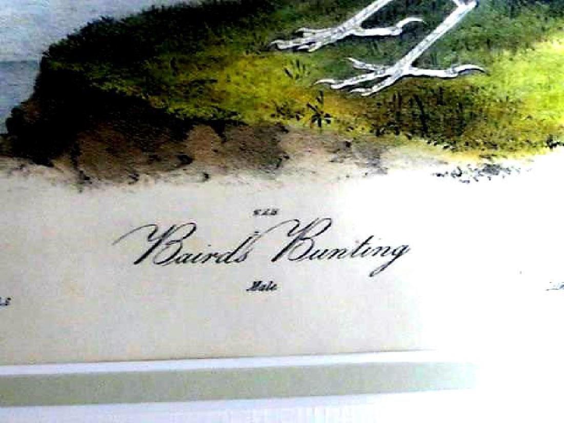 J.J. Audubon. Octavo. Baird's Bunting No.500 - 2