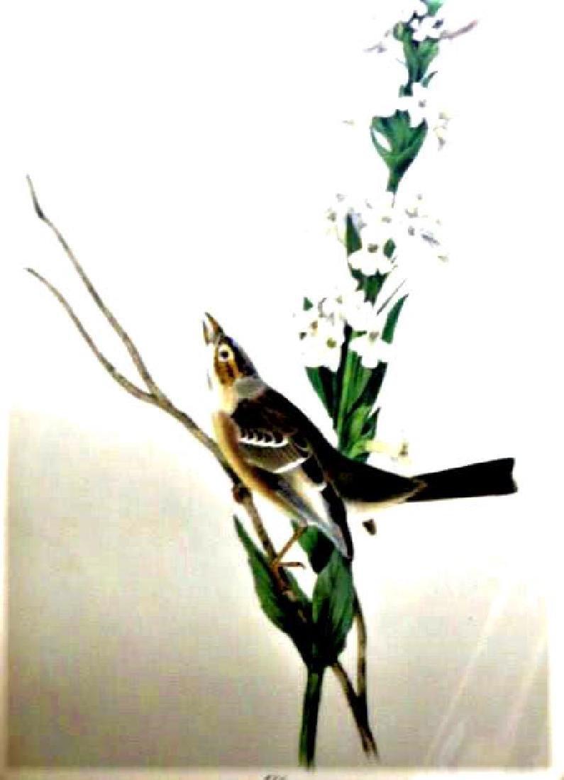 J.J. Audubon. Octavo. Shattucks Bunting No.493