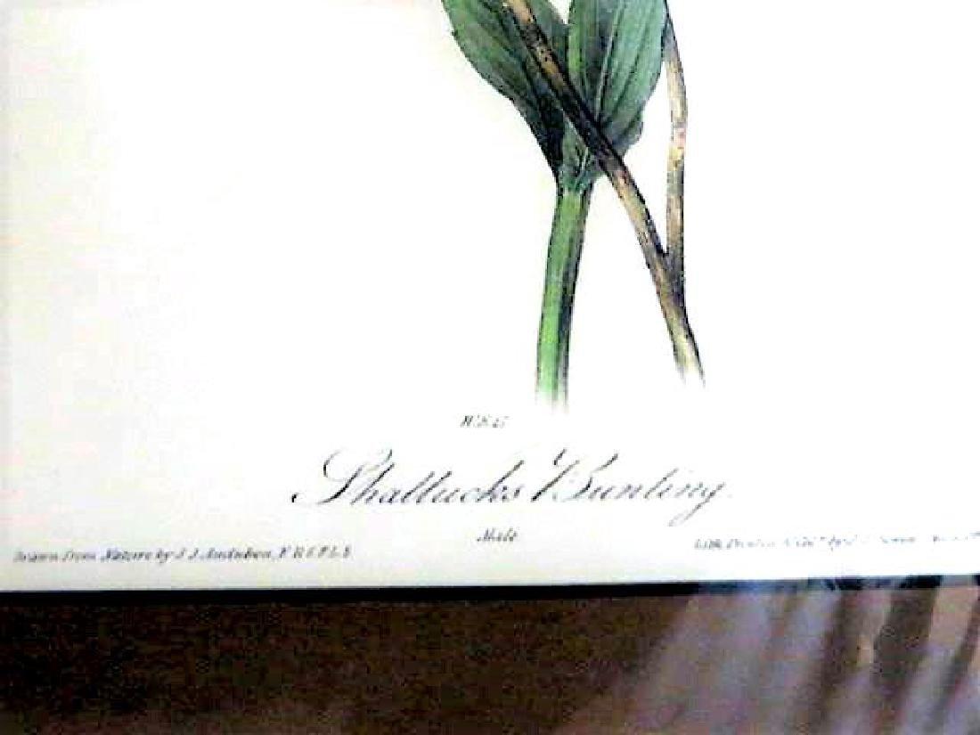 J.J. Audubon. Octavo. Shattucks Bunting No.493 - 2