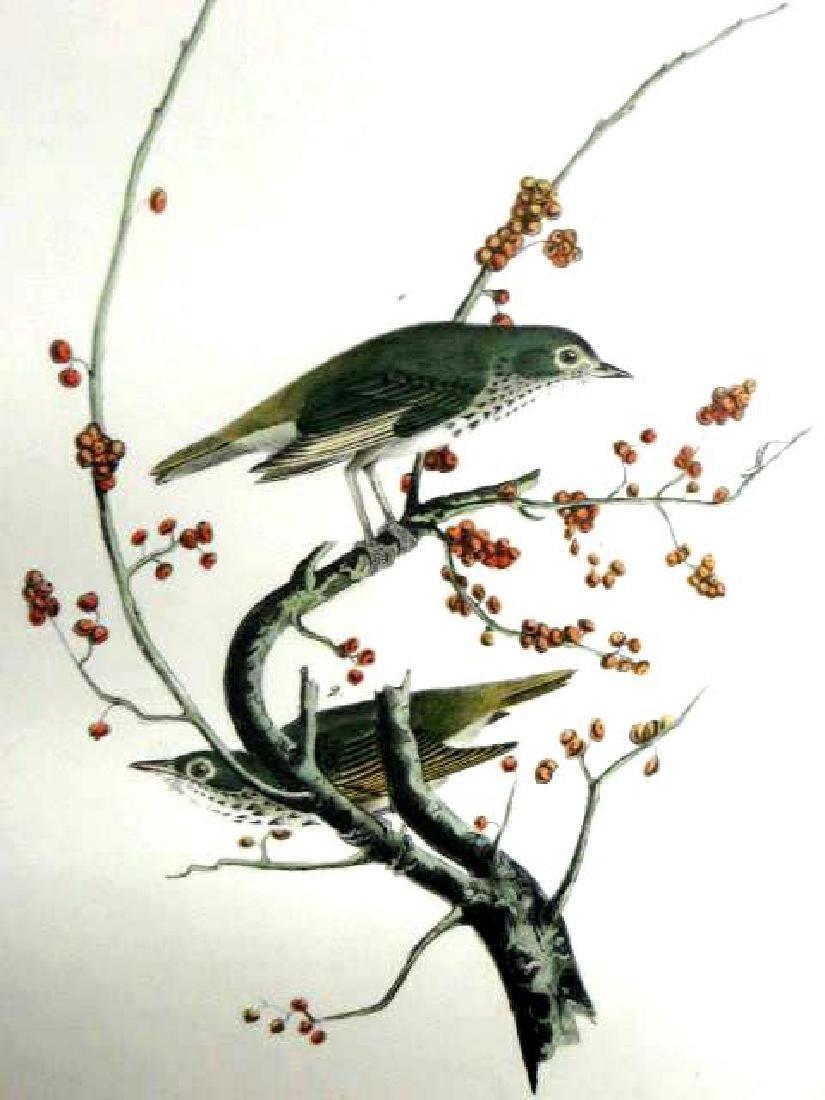 J.J. Audubon. Octavo. Hermit Thrush No.146