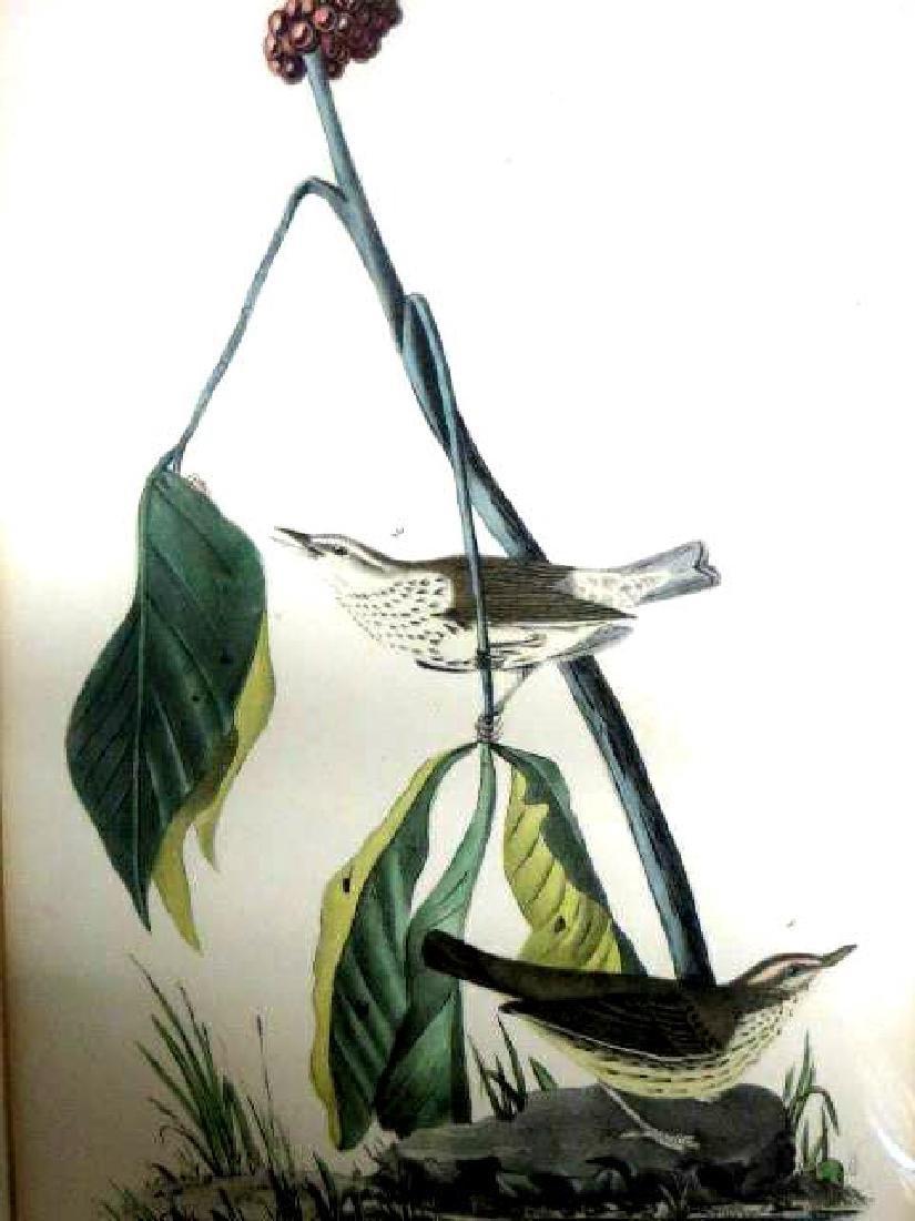 J.J. Audubon. Octavo. Aquatic Wood Wagtail No.149