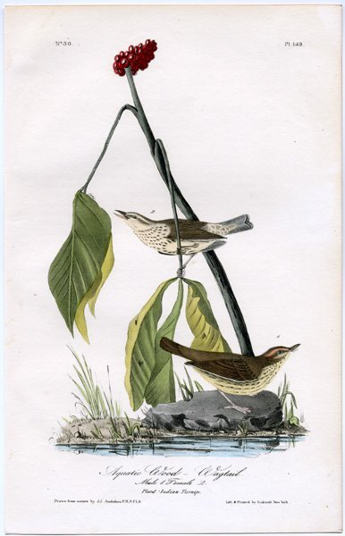 J.J. Audubon. Octavo. Townsend's Bunting No.157