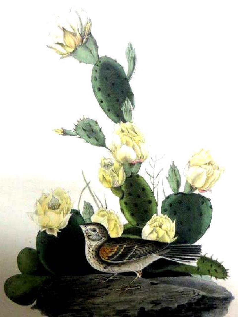J.J. Audubon. Octavo. Bay-Winged Bunting No.159