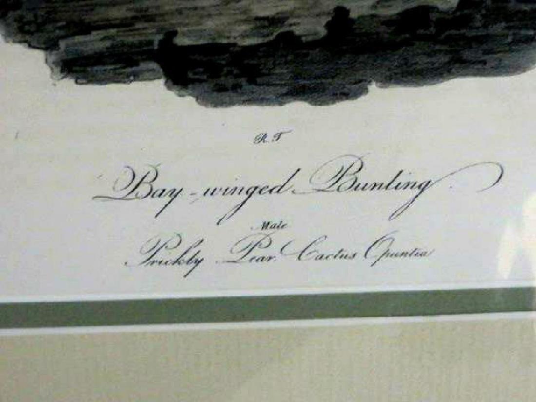 J.J. Audubon. Octavo. Bay-Winged Bunting No.159 - 2