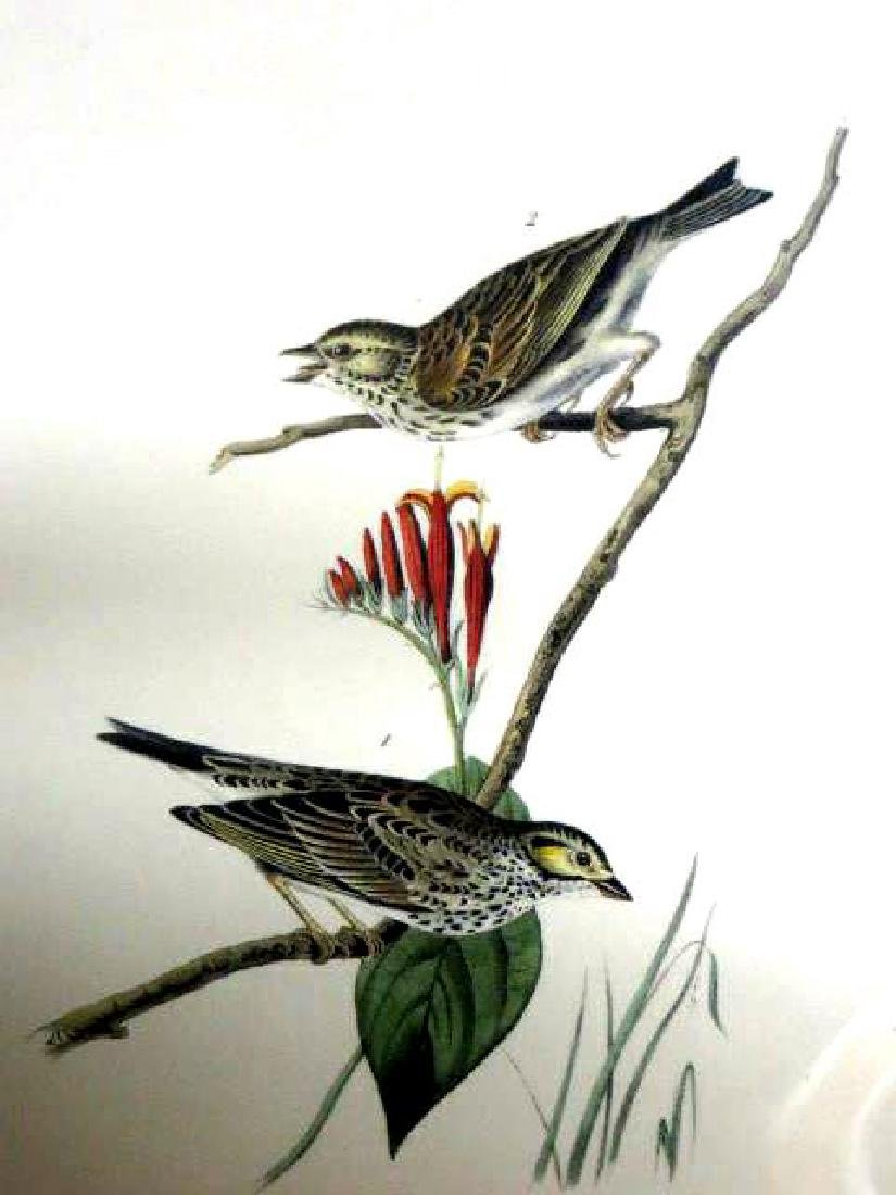 J.J. Audubon. Octavo. Savannah Bunting No.160