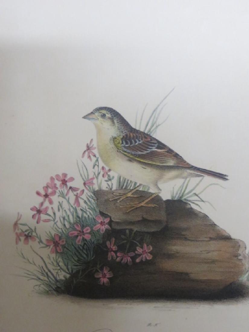J.J. Audubon. Octavo. Yellow-Winged Bunting No.162