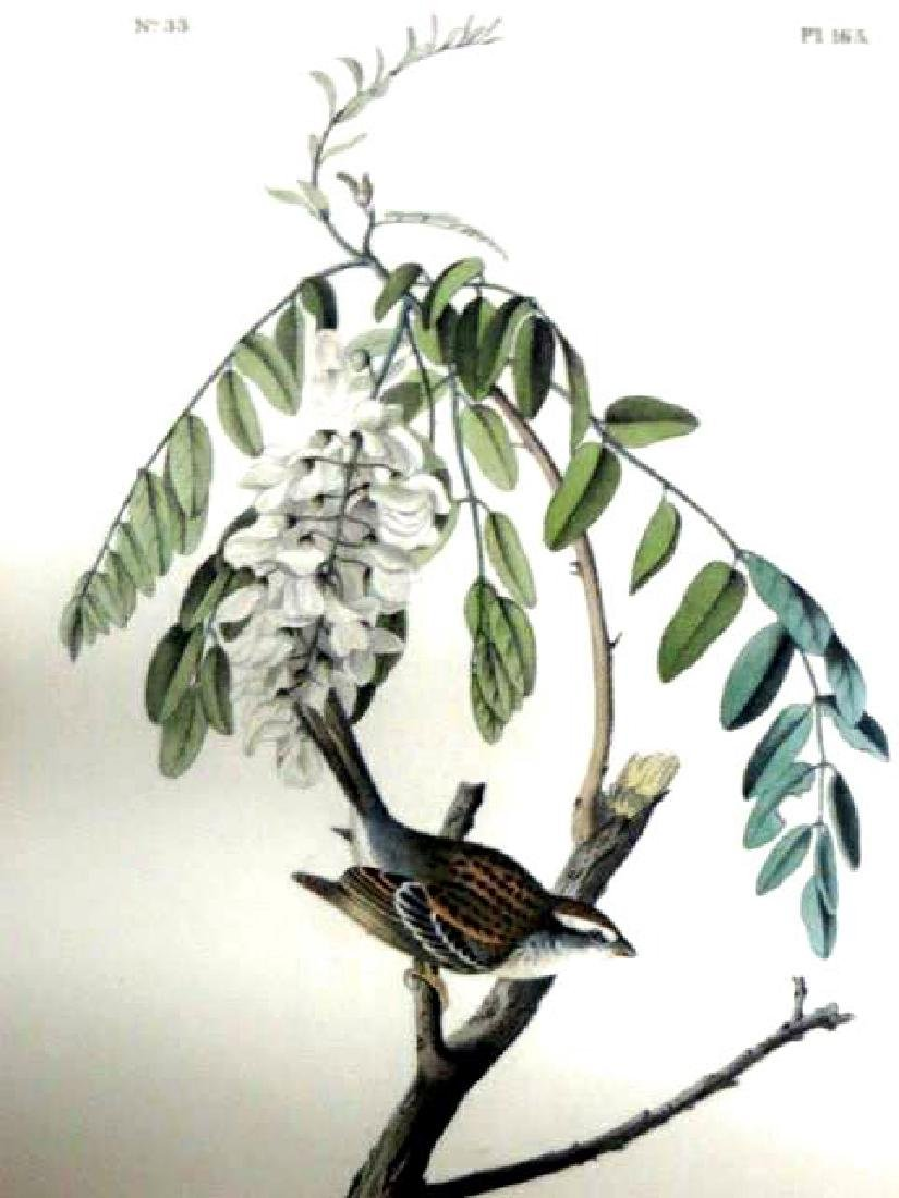 J.J. Audubon. Octavo. Chipping Bunting No.165