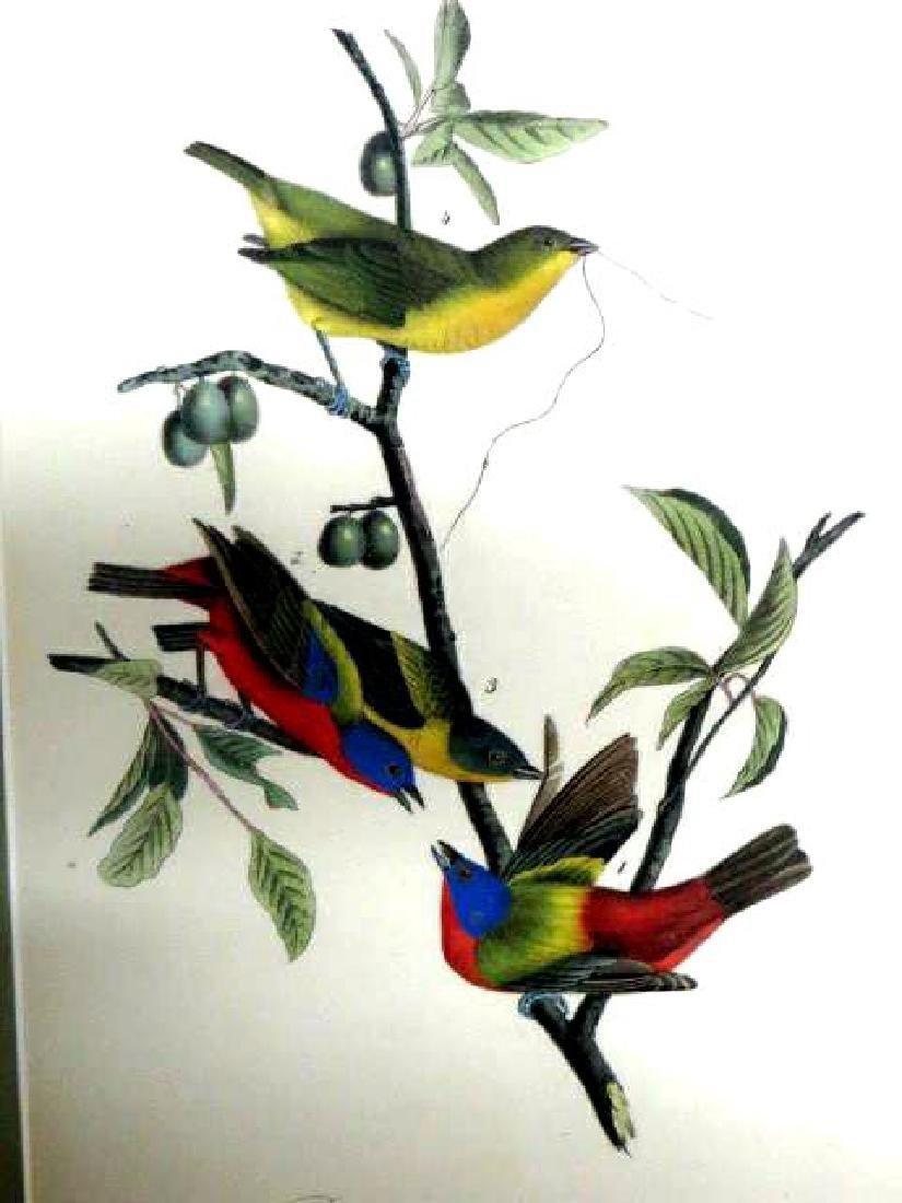 J.J. Audubon. Octavo. Painted Bunting No.169