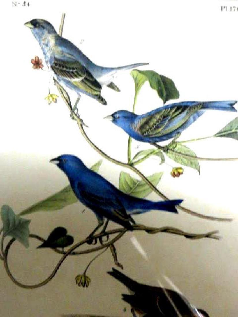 J.J. Audubon. Octavo. Inigo Bunting No.170