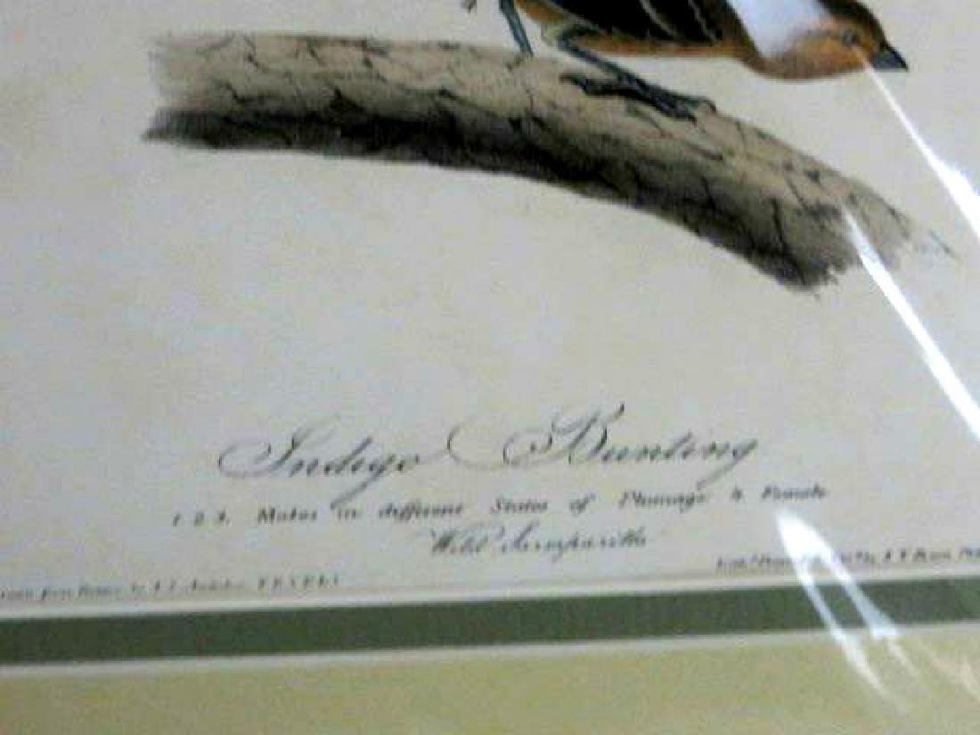 J.J. Audubon. Octavo. Inigo Bunting No.170 - 2