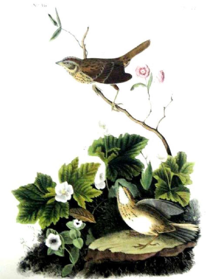 J.J. Audubon. Octavo. Lincolns Pinewood Finch No.177