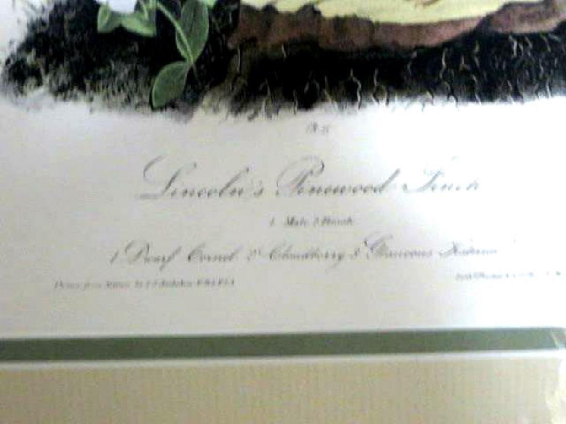 J.J. Audubon. Octavo. Lincolns Pinewood Finch No.177 - 2