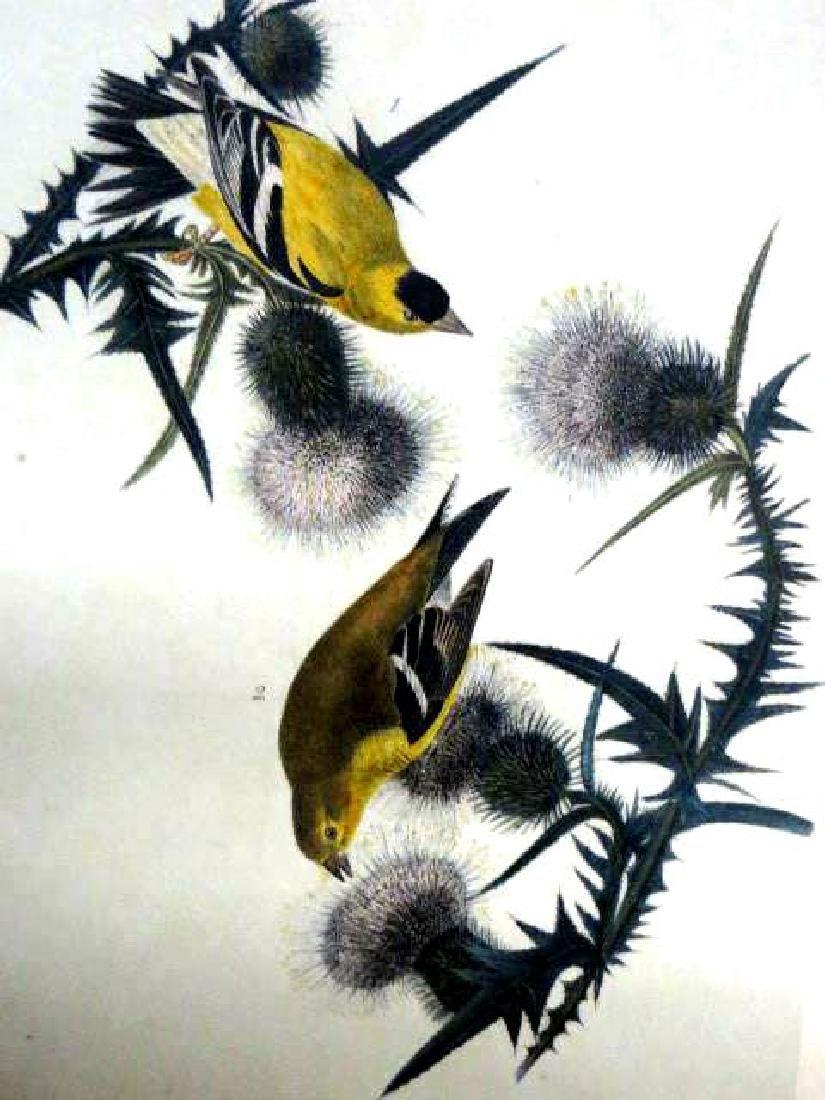 J.J. Audubon. Octavo. American Goldfinch No.181