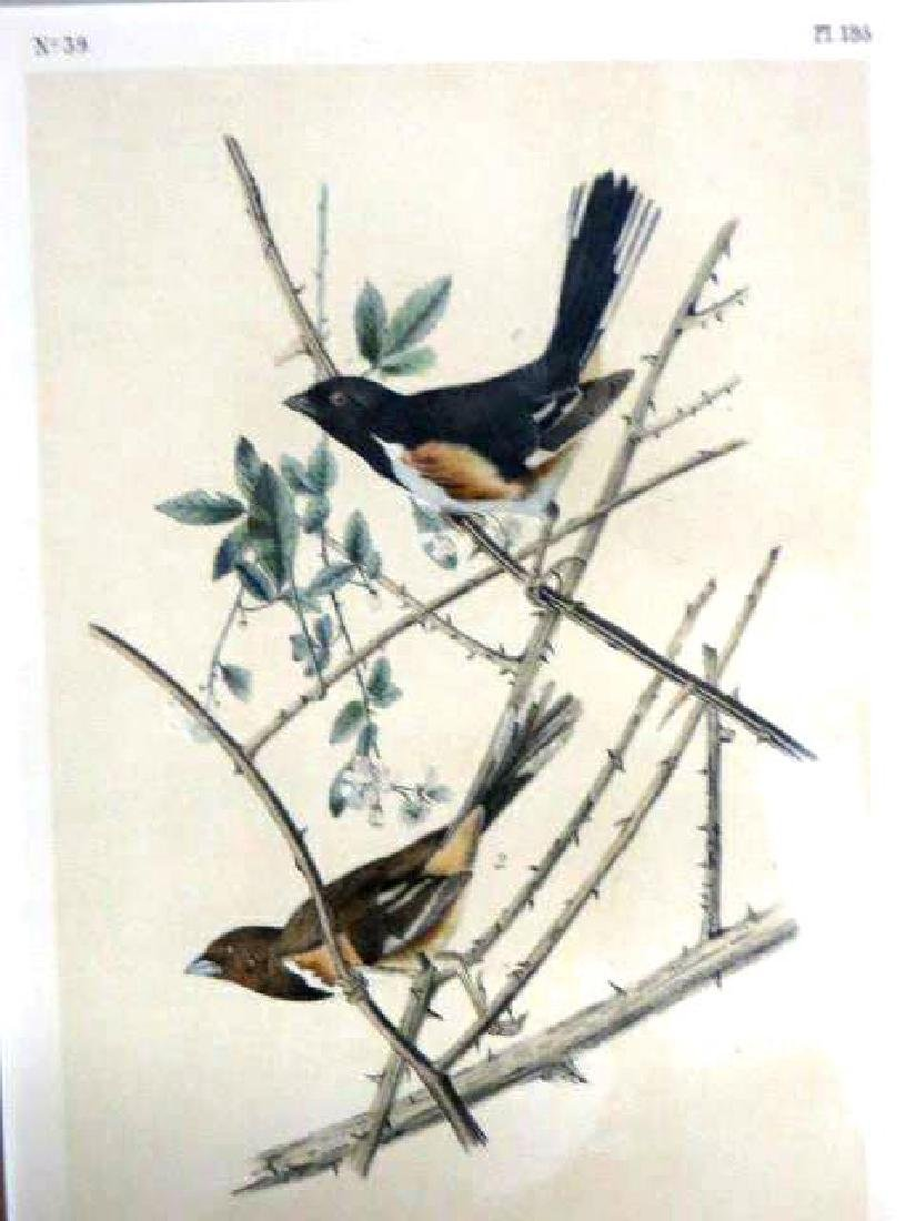 J.J. Audubon. Octavo. Towhe Ground Finch No.195