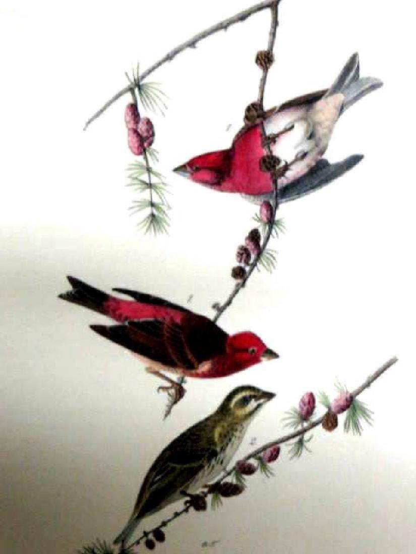 J.J. Audubon. Octavo. Crested Purple Finch No.196