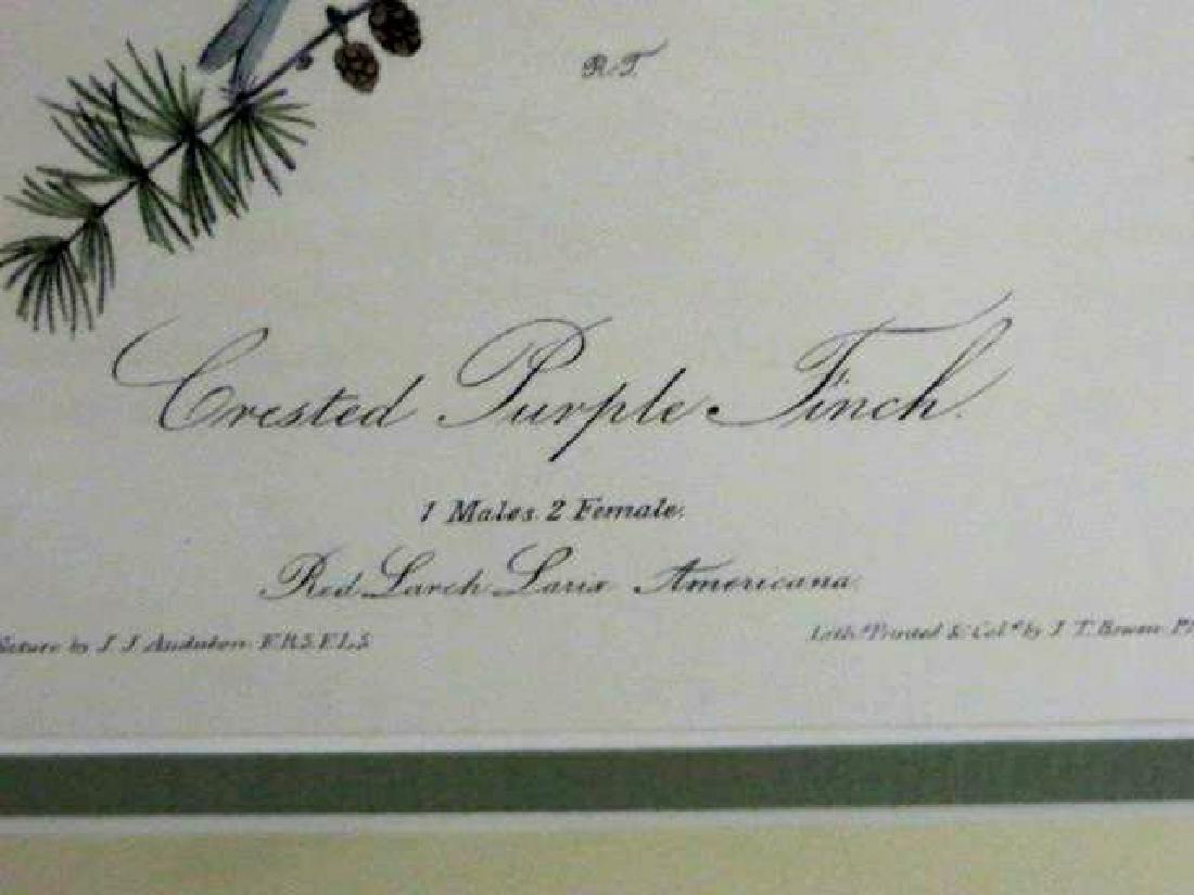 J.J. Audubon. Octavo. Crested Purple Finch No.196 - 2