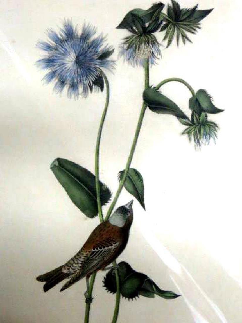 J.J. Audubon. Octavo. Grey-Crowned Purple Finch No.198