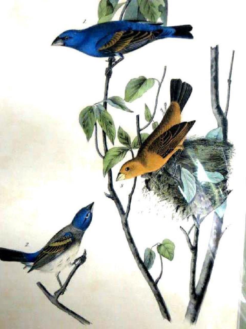 J.J. Audubon. Octavo. Blue Song Grosbeak No.204