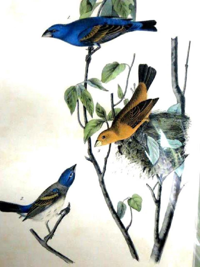J.J. Audubon. Octavo. Blue Song Grosbeak No.204