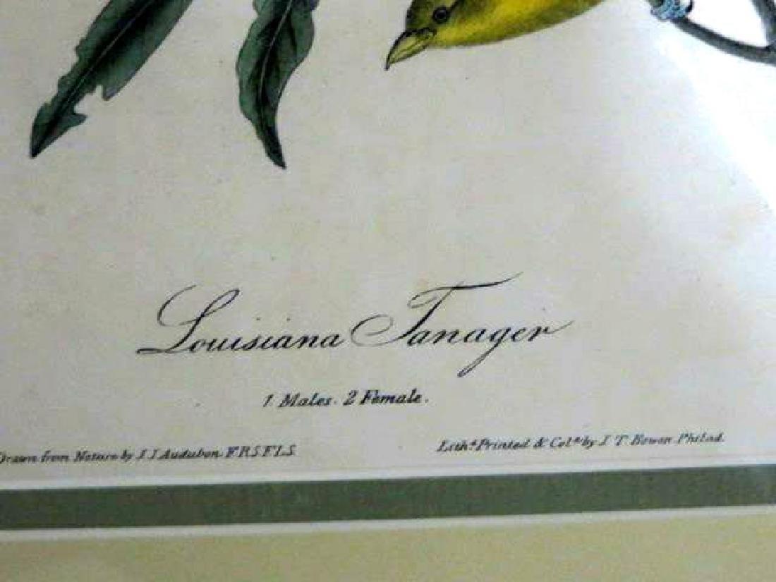 J.J. Audubon. Octavo. Louisiana Tanager No.210 - 2
