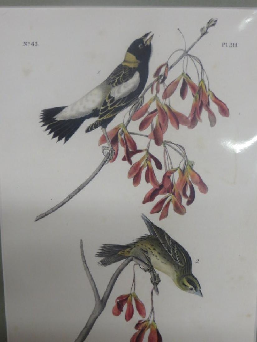 J.J. Audubon. Octavo. Wandering Rice Bird No.211