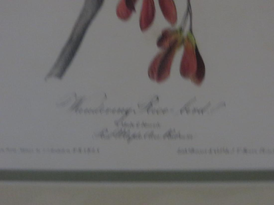J.J. Audubon. Octavo. Wandering Rice Bird No.211 - 2