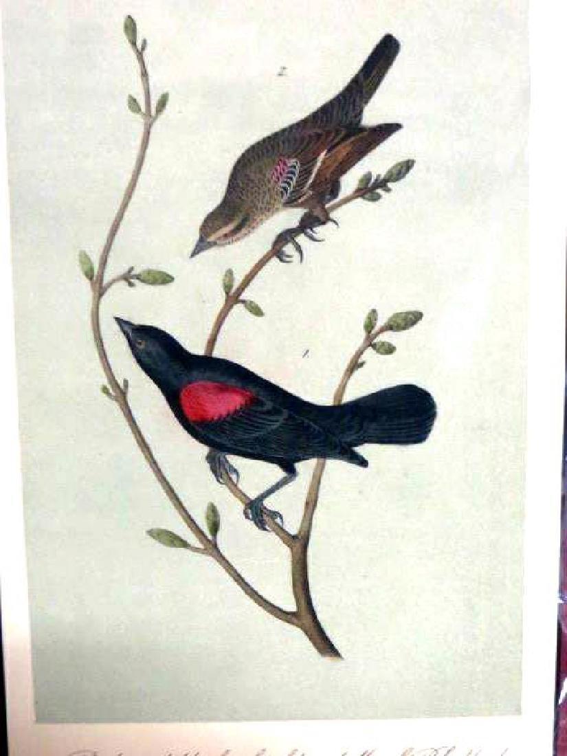 J.J. Audubon. Octavo. Red & Black Shouldered Blackbird