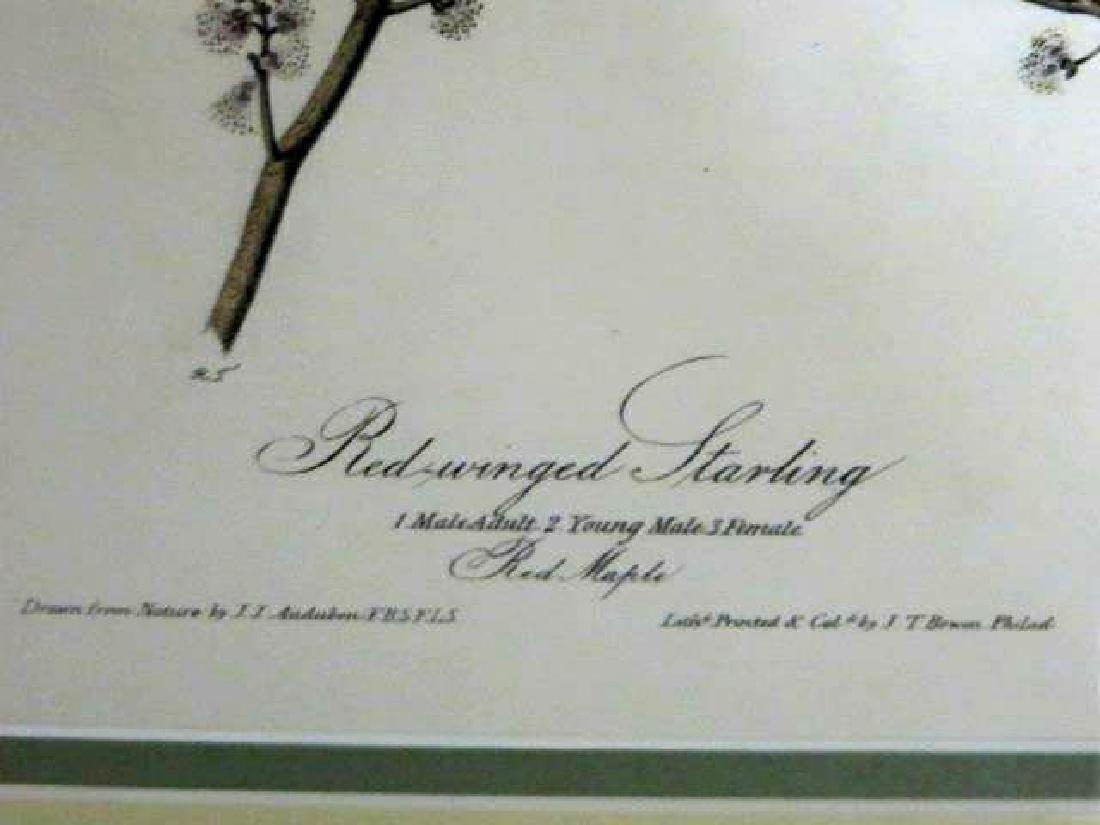 J.J. Audubon. Octavo. Red Winged Starling No.216 - 2