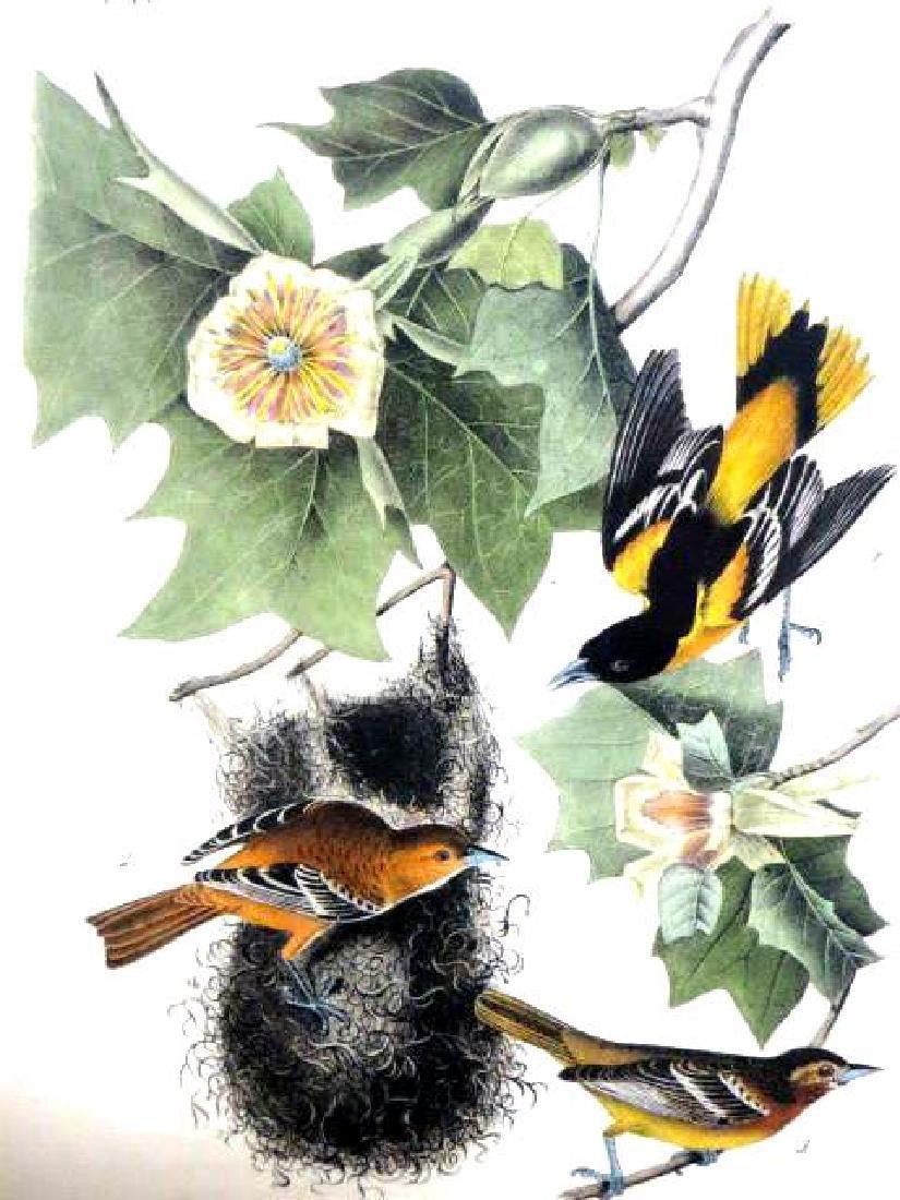 J.J. Audubon. Octavo. Baltimore Oriole or Hang-Nest