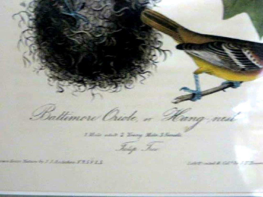 J.J. Audubon. Octavo. Baltimore Oriole or Hang-Nest - 2