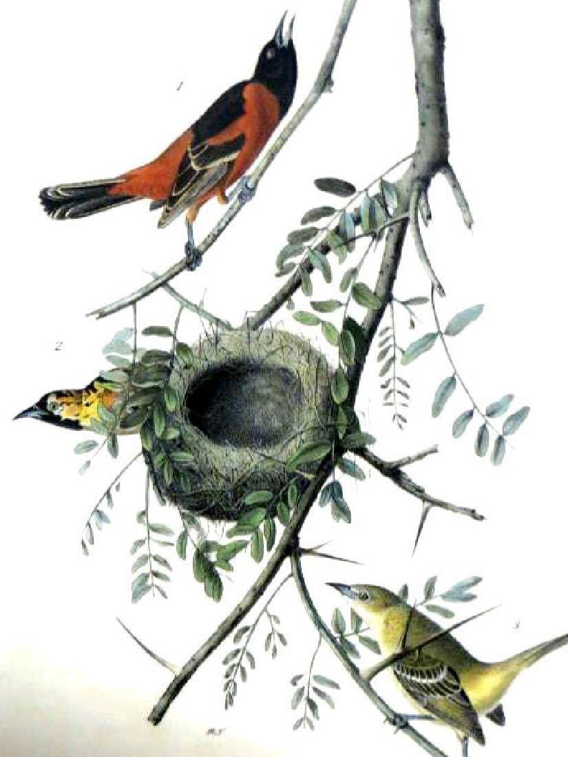 J.J. Audubon. Octavo. Orchard Oriole or Hang-Nest