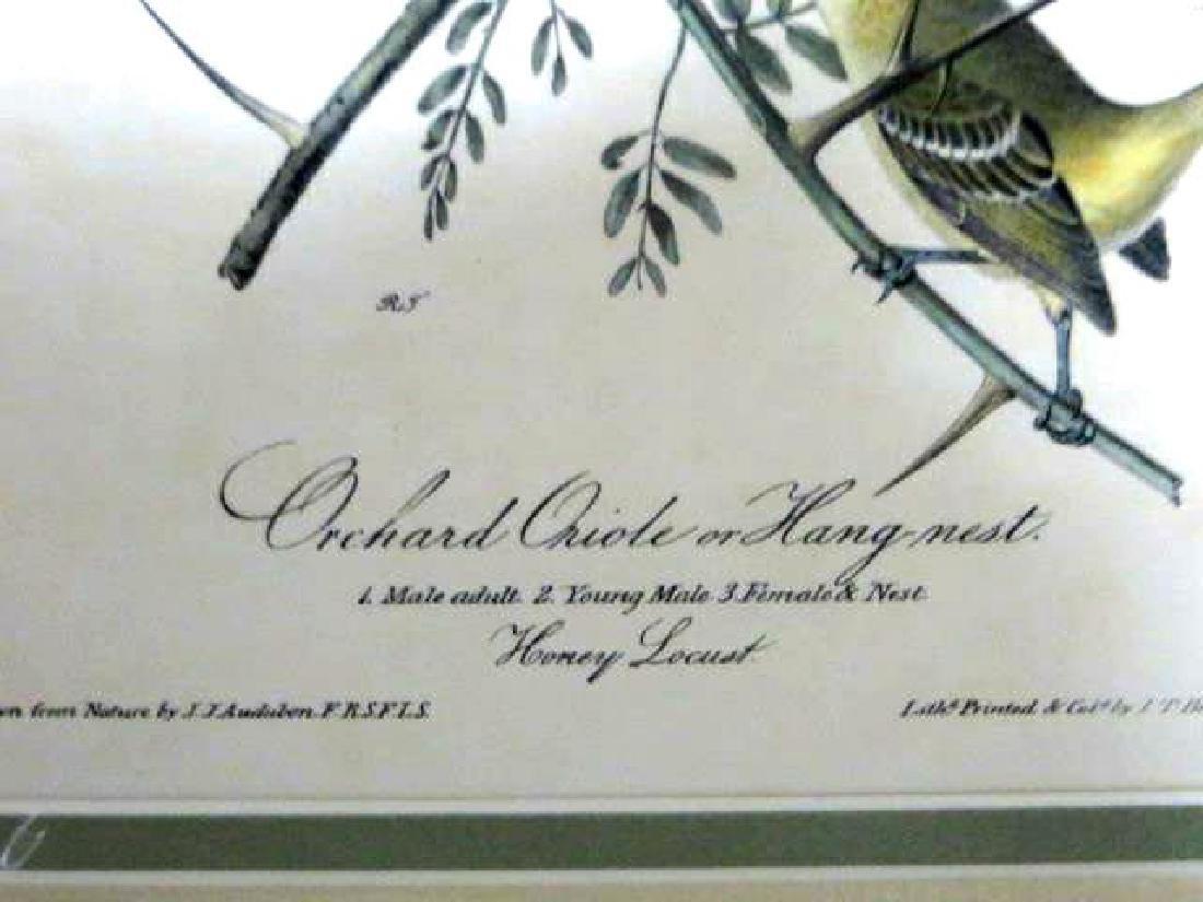 J.J. Audubon. Octavo. Orchard Oriole or Hang-Nest - 2